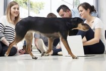 Groupe de professionnels créatifs travaillant avec chien passant sur le sol — Photo de stock