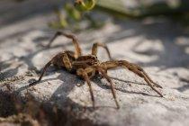Spider sitting on stone — Stock Photo