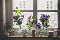 Fila di diversi vasi con il lillà, Syringa, sul davanzale della finestra — Foto stock