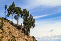 South America, Peru, Tacquile Island, Rocky coast and trees — Stock Photo