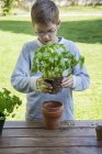 Boy potting basil on wooden table — Stock Photo