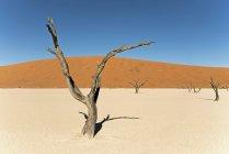Africa, Namibia, Sossusvlei, dune di sabbia e alberi morti sulla sabbia — Foto stock