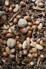 Anice stellato, noci, nocciole, mandorle e cannella, vista parziale — Foto stock