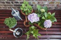 Plantes pour le balcon sur la surface en bois — Photo de stock