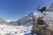 Austria, Vorarlberg, View of Lechquellengebirge mountain and Zugertal valley — Stock Photo