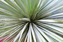 View of Palm tree leaves, close up — Stock Photo