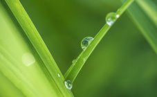 Austria, Close up of water drops on leaf — Stock Photo