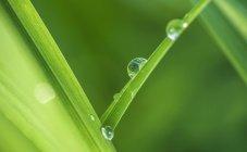 Австрия, крупным планом капли воды на листьях — стоковое фото