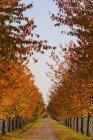 З видом на алеї листяних дерев восени, Штутгарт, Баден-Вюртемберг, Німеччина — стокове фото