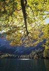 Австрия, вид Hinterer Langbathsee озеро и горы в фоновом режиме — стоковое фото