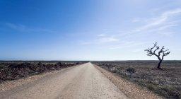 Пряма дорога з голими дерево — стокове фото