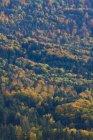 Germania, Baden Wuerttemberg, vista della foresta vicino a Hechingen — Foto stock