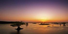 Estados Unidos, Florida, Manglar en pantano al atardecer - foto de stock