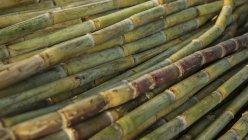 India, Old Delhi, Close up of sugarcane, full frame — Stock Photo