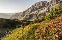 Человек, походы через горами Нидере Тауэрн на рассвете в Зальцбурге, Австрия — стоковое фото