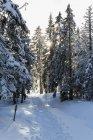 Німеччина, Баварія, трек до гори в оточенні баварського лісу — стокове фото