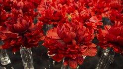 EUA, Califórnia, San Francisco, deco flor vermelha, close-up — Fotografia de Stock