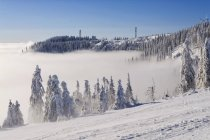 Black Forest in winter — Stock Photo