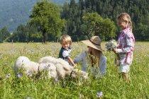 Mère avec enfants caresser les moutons en alpage, Salzbourg, Autriche — Photo de stock