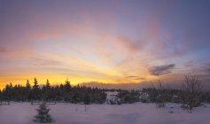 Alemanha, nascer do sol de inverno em Schliffkopf em Baiersbronn — Fotografia de Stock