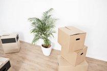 Kartons und Pflanzkübel — Stockfoto