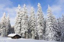 Німеччина, Баварія, Snowy дерев'яна хата та дерев у Баварський ліс — стокове фото