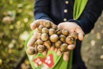 Close-up of girl collecting acorns in autumn forest — Stock Photo