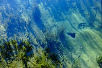 Germania, Baviera, Iffeldorf, Lago d'Ostersee, acque limpide — Foto stock