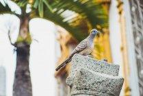 Thailand, bird sitting on a rock — Stock Photo