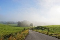 Alemania, Baviera, Alta Baviera, paisaje cerca de Hielo en la niebla matutina - foto de stock