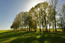 Alemanha, Baviera, Alta Baviera, Dietramszell, Árvores seguidas contra o sol — Fotografia de Stock