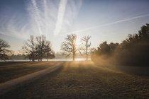 Germany, Brandenburg, Potsdam, park with trees in the morning light — Stock Photo