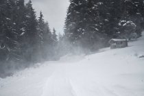 Bulgaria, road with blizzard in forest — Stock Photo