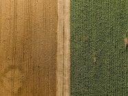Serbien, Vojvodina, landwirtschaftliche Felder, Luftaufnahme in der Sommersaison — Stockfoto