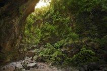 Испания, Канарские острова, Ла-Пальма, Скала в лесу — стоковое фото