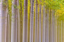 Beautiful blurred colored trees in Canamares, Spain — Stock Photo