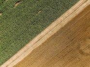 Сербия, Воеводина, сельскохозяйственные угодья, вид с воздуха в летний сезон — стоковое фото