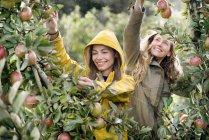 Due donne sorridenti che raccolgono mele dall'albero sotto la pioggia — Foto stock
