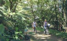 Семейные велосипеды в лесу — стоковое фото