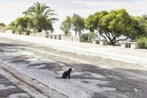 Греція, чорна кішка сидить на дорозі — стокове фото