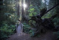 USA, California, Crescent City, Jedediah Smith Redwood State Park, hiking track — Stock Photo