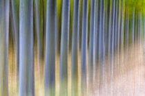 Schöne verschwommene farbige Bäume in canamares, spanien — Stockfoto