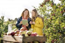 Two smiling women using tablet in apple orchard — Stock Photo