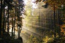 Germany, Bavaria, Lower Bavaria, Altmuehl Valley, forest, autumn, morning fog — Stock Photo