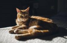 Джинджер Тэбби кот отдыхает на одеяле дома — стоковое фото