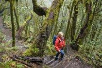 Espanha, Ilhas Canárias, La Gomera, caminhadas de mulheres através da floresta de nuvens no Parque Nacional de Garajonay — Fotografia de Stock