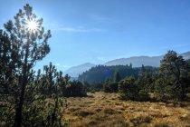 Alemanha, Baviera, Allgaeu Reserva Natural dos Alpes Altos — Fotografia de Stock