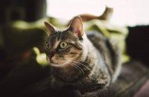 Портрет кота в главной роли дома — стоковое фото