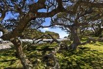 África, África do Sul, Eastern Cape, Coffee Bay, buraco na parede, árvore — Fotografia de Stock
