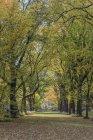 Соединенные Штаты Америки, New York City, Manhattan, Central Park — стоковое фото
